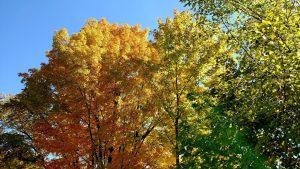 fall-colors-2